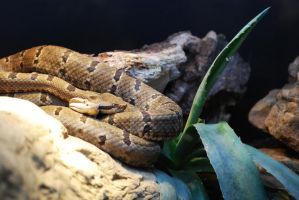 Cuddling Rattlers by ManitouWolf