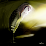 The Barn Owl by altergromit