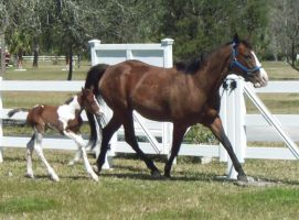 Mare and Foal 1 by ConvulsionStock