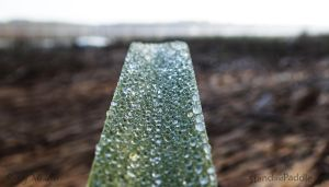 Early Morning Dew on Marshgrass 3 by PaddleGallery