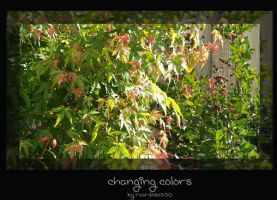 changing colors by rcardoso530