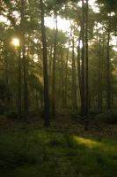 Woods at dawn 3 by steppeland