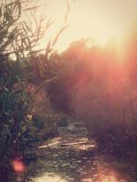 Swamp Life by Tammots23