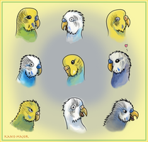 Budgie Expressions by Kanis-Major
