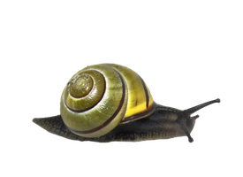 Snail by Moonglowlilly