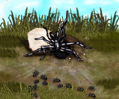 Spider Attaks ants by skycapx
