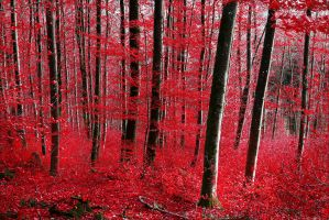 Bloodred Forest by Aenea-Jones