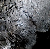 Charred Wood Texture 4 by PariahRisingSTOCKS