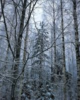 Forest in winter by Lum1pallo