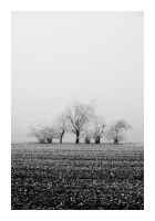 The fog lifted by matze-end
