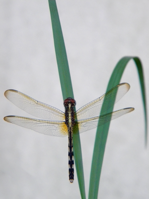 Dragonfly At Rest On Grass by The-Lost-Hope