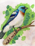 Lazuli Bunting by SeeWoods