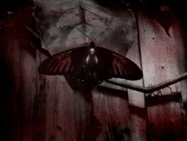 Butterfly from Hell by Scarecrowlover