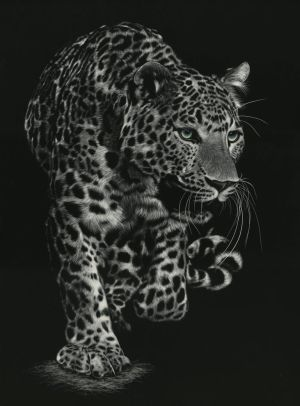 WIP - Scratchboard of Panther by shonechacko