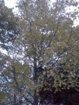 The Yellowing Leaves by dhbraley