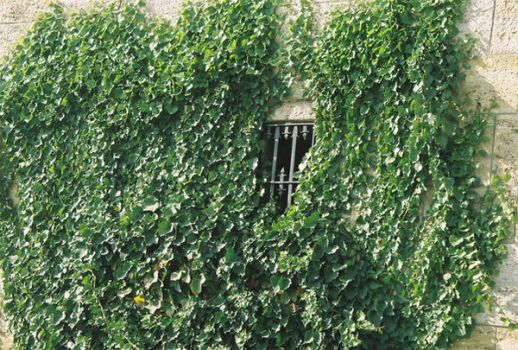 ivy and window by cagdas-11