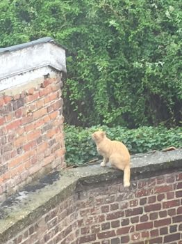 Cat at the Irish College by MissIzzy