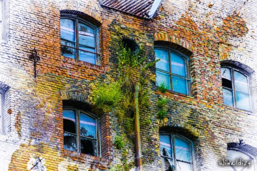 Wall, ruins and plants ... by wiwaldi24