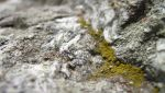 Green lichen by truethelens