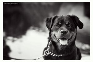 Rottweiler girl by NewForestPhotography