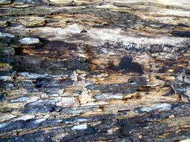 Stock Texture - decayed wood by rockgem