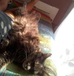My cat Max, or, as I like to call him, Stephano by telmixka