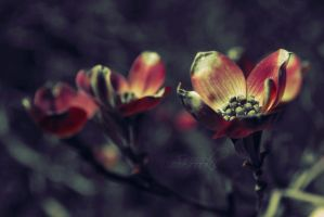Pink Dogwood by ReachForTheStarfish