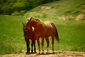 A couple of horses by MNgreen