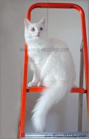 Ziggy on the Stepladder by substar