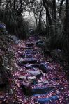 Pathed Way by ShaymusT