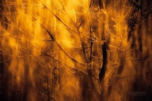 Burning Branches by Nitrok