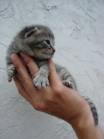 Baby Cat 14 by FantasyStock