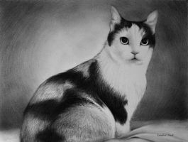 Cat Portrait by Nealism