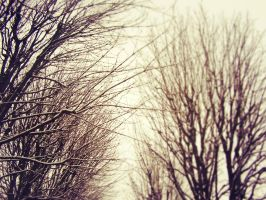 *Snowy trees in Paris* EDITED by OwlsomeArts