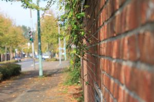A Wall with Plants by TheSoullessRedbeard