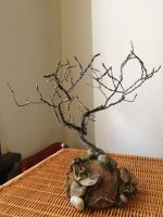 Bonsai Tree on Coconut Hill by GriffinsJoy
