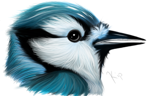 BlueJay by Kippchi
