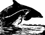 Please Help ..Stop the killings at the Cove by ladyjart
