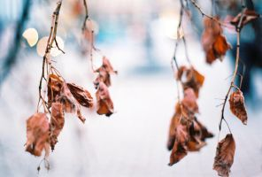 Analog Autumn #3 by rocknrolf77
