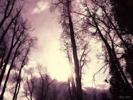 purple forest by realhaydengabba