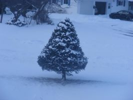 snow covered tree by BlueIvyViolet