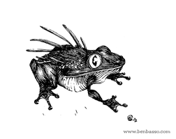 frog by BenBASSO