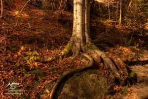 HDR Your Roots are Showing 2 by Nebey