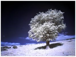 On the hill IR by caithness155