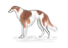 First Borzoi sketch by Avocet21