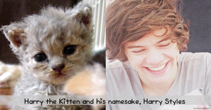 My New Kitten, Harry by iluvlouis