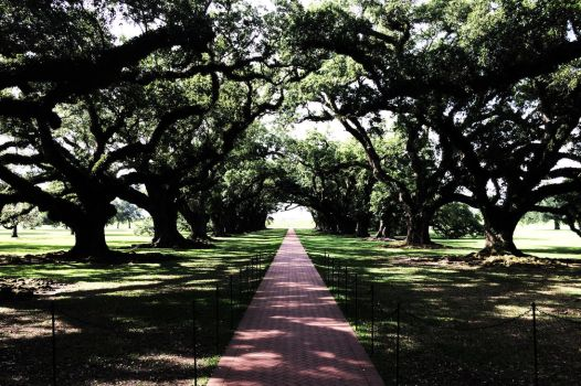 Oak Alley Plantation by N4S-GFX
