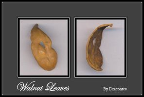 Walnut Leaves by dracontes