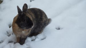 loulou in the snow 2 by Bleach-Fairy