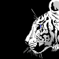 Tiger by lmsmith